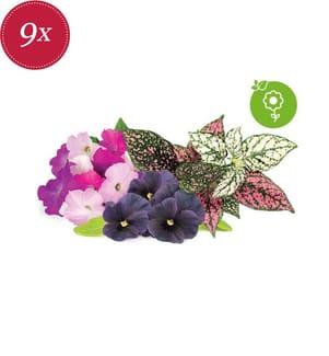 CLICK AND GROW - Packung mit 9 Nachfüllpackungen für SMART GARDEN - Vibrationsblumen