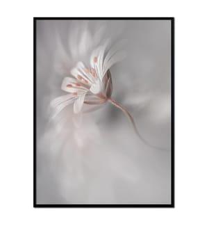 ART STUDIO - Gerahmtes Bild Flores - 30 x 40 cm